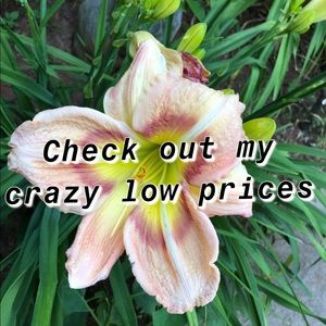 Check out my crazy low prices